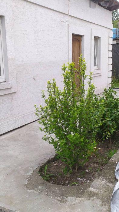 Сдам долгосрочно дом, г. Киев                               в р-не Бортничи возле м. <strong>Бориспольская</strong>                                  фото